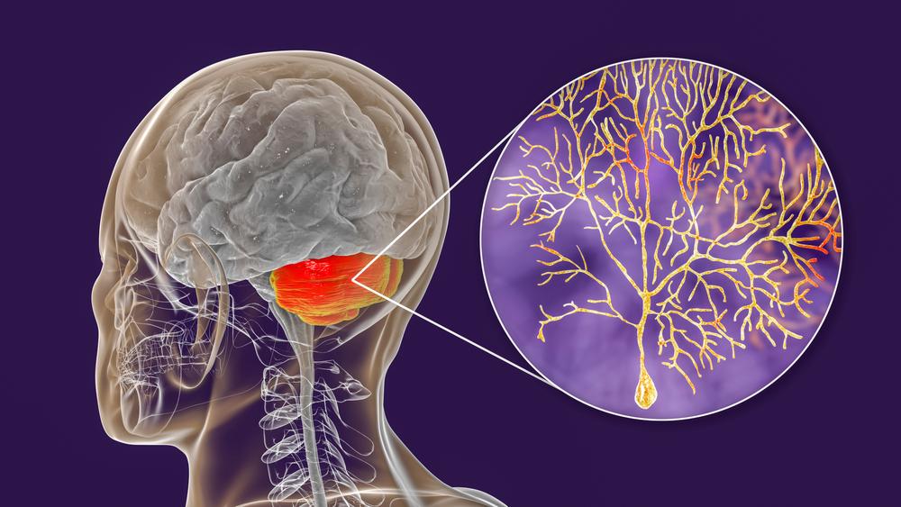 gaba brain neurotransmitter